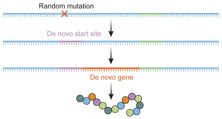 The de novo formation of a gene.