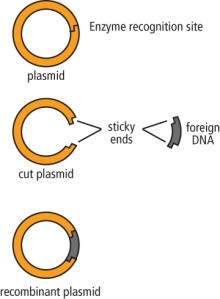Figure 4:  Molecular Cloning Strategies