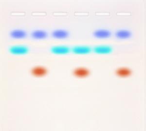 Learn about DNA fingerprinting using Colorful Dyes!  ©Edvotek 2014