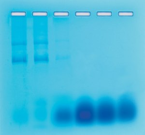 Separation of RNA and DNA by Gel Filtration Chromatography