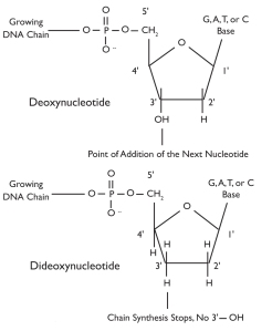 Fig. 2: Molecular structure  dNTPs versus ddNTPs