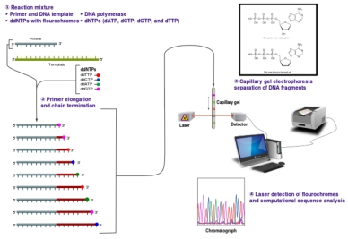 Fig. 1:  DNA sequencing in today's laboratories.  CC-BY-SA estevezj